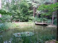 A nyugalom szigete a főváros mellett – Budakeszi Arborétum
